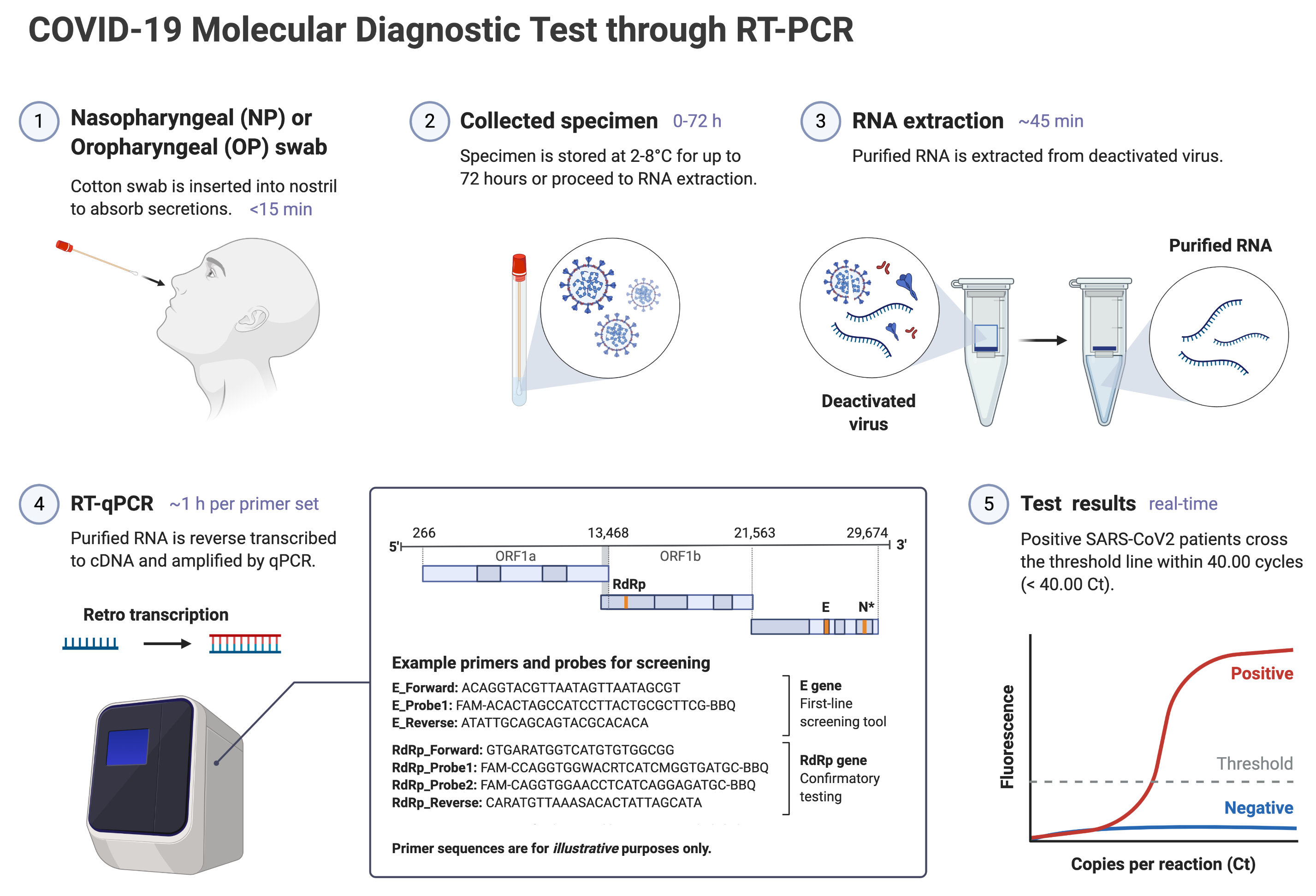 COVID-19 Molecular Diagnostic through RT-PCR