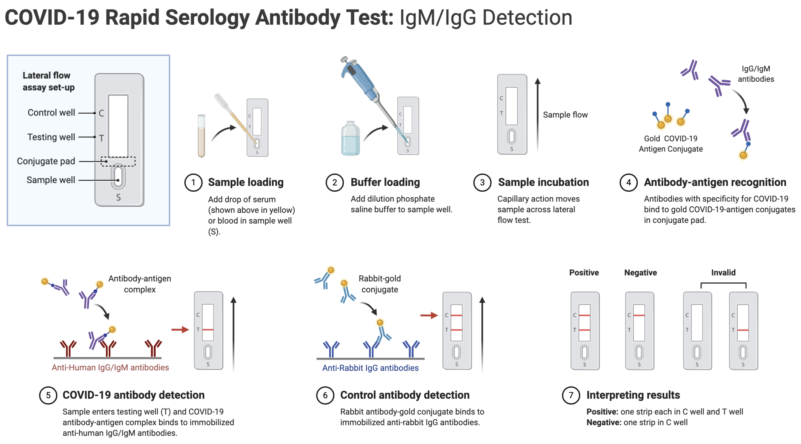 COVID-19 Rapid Serology Antibody Test: IgM/IgG Detection